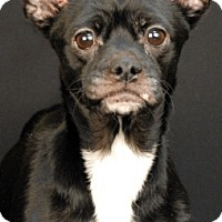 Adopt A Pet :: Nooks - Newland, NC