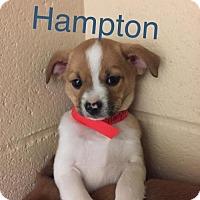 Adopt A Pet :: Hampton - Keyport, NJ