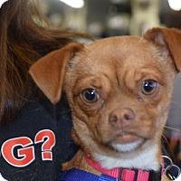 Adopt A Pet :: Emilee Preston - Seattle, WA