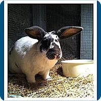 Adopt A Pet :: Bandit - Williston, FL