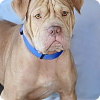 Adopt A Pet :: Hooch - Scottsdale, AZ