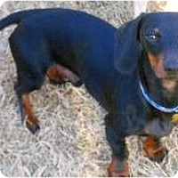 Adopt A Pet :: Zeke - San Jose, CA