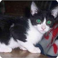 Adopt A Pet :: Oreo - Irvine, CA