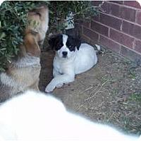 Adopt A Pet :: Addison - Adamsville, TN