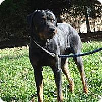 Adopt A Pet :: BREW - ROCKMART, GA