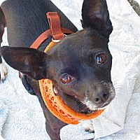 Adopt A Pet :: Robyn - Culver City, CA