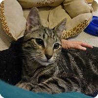 Adopt A Pet :: Sebastian - Colmar, PA