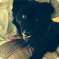 Adopt A Pet :: A326362  Luke - San Antonio, TX