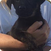 Adopt A Pet :: Rowdy - Temecula, CA