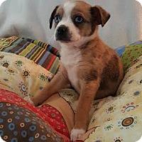 Adopt A Pet :: Babette - Homewood, AL