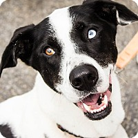 Adopt A Pet :: Johnny - Pierrefonds, QC