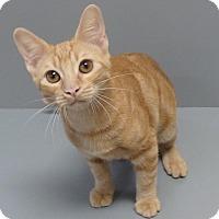 Adopt A Pet :: Giuseppe - Seguin, TX