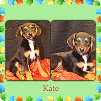 Adopt A Pet :: Kate in CT - Manchester, CT