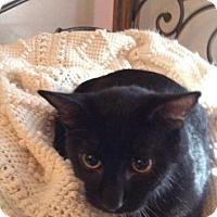 Adopt A Pet :: Lee - Abbeville, LA