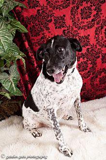Pointer Mix Dog for adoption in Elizabethtown, Pennsylvania - Riley