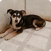Adopt A Pet :: Spree - Saskatoon, SK