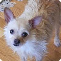 Adopt A Pet :: Bessie - Bellevue, WA
