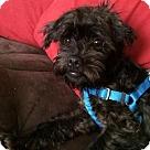 Adopt A Pet :: Percy- Adoption Pending
