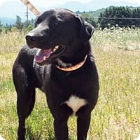 Adopt A Pet :: Rufus - Grants Pass, OR