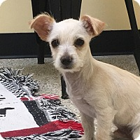 Adopt A Pet :: Chase - Thousand Oaks, CA