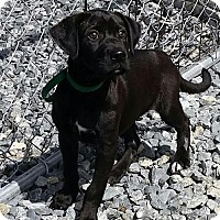 Adopt A Pet :: Simone - Thomasville, NC