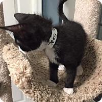 Adopt A Pet :: Sam - Tallahassee, FL