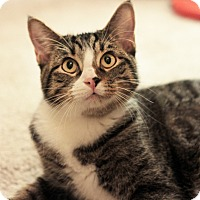 Adopt A Pet :: William - Chicago, IL