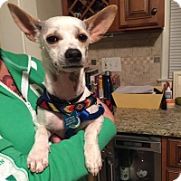 Adopt A Pet :: Atom - Bristol, CT