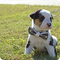 Adopt A Pet :: Jake - Aubrey, TX