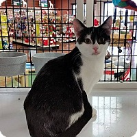Adopt A Pet :: Bitsy - Mebane, NC