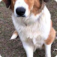 Adopt A Pet :: Sky - Bradenton, FL