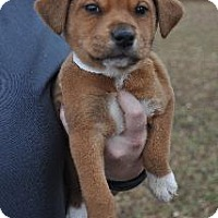 Adopt A Pet :: Cocoa - Richardson, TX