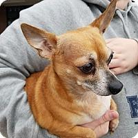 Adopt A Pet :: Paco - Ogden, UT