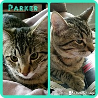 Adopt A Pet :: Parker - Arlington/Ft Worth, TX