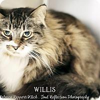 Adopt A Pet :: Willis - Appleton, WI