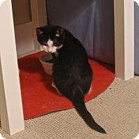 Adopt A Pet :: Luck - Covington, KY