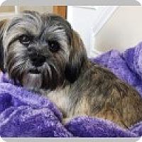 Adopt A Pet :: Mabel - Pittsboro, NC