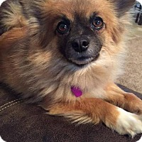 Adopt A Pet :: Chelsea - Delaware, OH