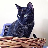 Adopt A Pet :: Reba - Island Park, NY
