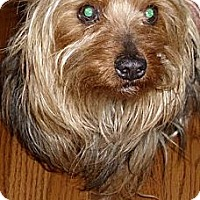 Adopt A Pet :: Nikki - Orange, CA