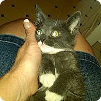 Adopt A Pet :: Nora - Sterling Hgts, MI