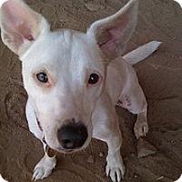 Adopt A Pet :: TJ - Santa Monica, CA