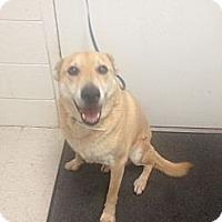 Adopt A Pet :: Cody - Lancaster, VA
