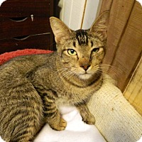 Adopt A Pet :: Truman - The Colony, TX