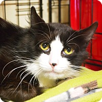 Adopt A Pet :: Sylvester - Ocean City, NJ