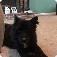 Adopt A Pet :: Suri - Acushnet, MA