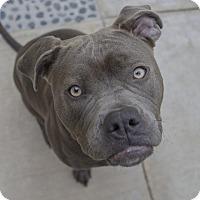 Adopt A Pet :: SUNNY (video) - Los Angeles, CA