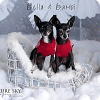 Adopt A Pet :: Bambi & Bella - Mesa, AZ