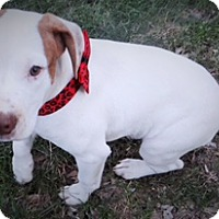 Adopt A Pet :: Rosa - Richmond, VA