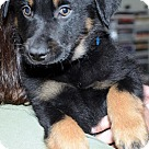 Adopt A Pet :: Ryker - Adoption Pending!